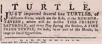 Advert for turtles for sale