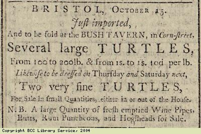 Advert for turtles just imported