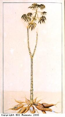 Plant with long bare stem