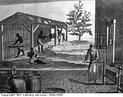 Tobacco processing on a plantation